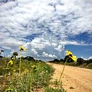 Sunflower Hitchhikers Poster