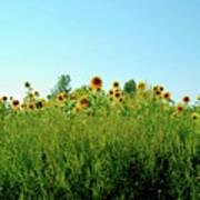 Sunflower Horizon Poster
