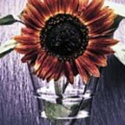 Sunflower In A Cup Poster