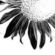 Sunflower In Corner Bw Threshold Poster