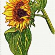 Sunflower In Gouache Poster