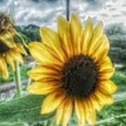 Sunflower In Town Poster