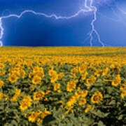 Sunflower Lightning Field  Poster