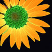 Sunflower Mosaic 1 Poster