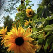 sunflower No.8 Poster