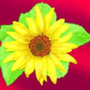 Sunflower On Red Background Poster