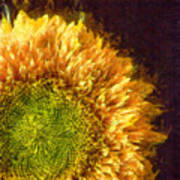 Sunflower Pencil Poster