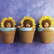 Sunflower Pots Poster by Anne Geddes