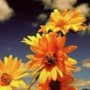 Sunflower Skies Poster