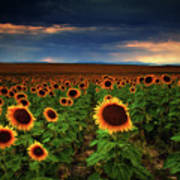 Sunflower Storms Poster