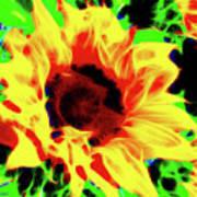 Sunflower Sunburst Poster