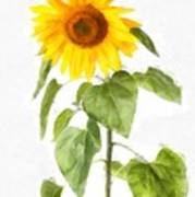 Sunflower Watercolor Poster