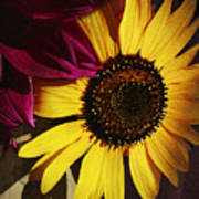 Sunflower With Dahlia Poster