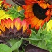 Sunflower2 Poster