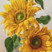 Sunflowers 1 Poster