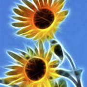 Sunflowers-5246-fractal Poster