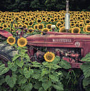 Sunflowers And Tractor Poster