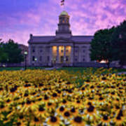 Sunflowers At The Old Capitol Poster