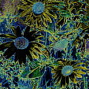 Sunflowers By Wall Poster