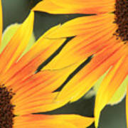 Sunflowers Corners Poster