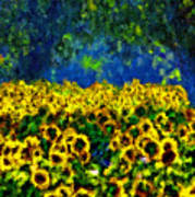 Sunflowers No2 Poster