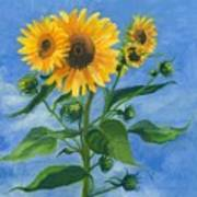 Sunflowers On Bauer Farm Poster