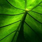 Sunglow Green Leaf Poster