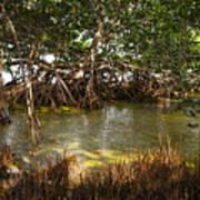Sunlight In Mangrove Forest Poster