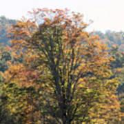 Sunlight On Autumn Foliage Poster