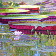Sunlight On Lily Pads Poster