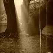 Sunlight On Swing - Sepia Poster