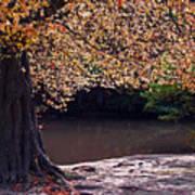 Sunlit Autumn Canopy Poster