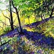 Sunlit Bluebell Wood Poster