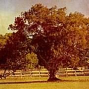 Sunlit Landscape Poster