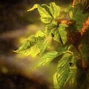 Sunlit Leaves Poster