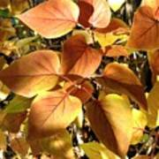 Sunlit Lilac Leaves Poster