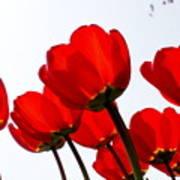 Sunlit Petals Poster