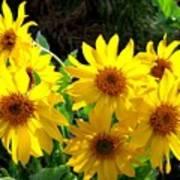 Sunlit Wild Sunflowers Poster