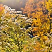 Sunlit Wildflower Poster