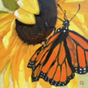 Sunny Butterfly Poster