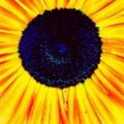 Sunny Flower Poster