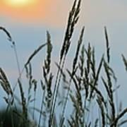 Sunrise Over Grass Poster