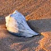 Sunrise Seashell Poster