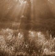 Sunrise Sepia Poster