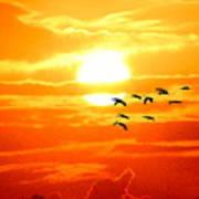 Sunrise / Sunset / Sandhill Cranes Poster