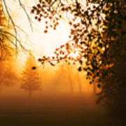 Sunrise Trees Fog Poster