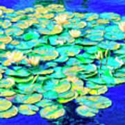 Sunrise Waterlilies Poster