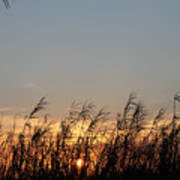 Sunset And Palm Grass Poster