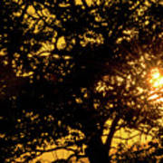 Sunset And Trees - San Salvador I Poster