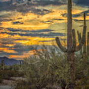 Sunset Approaches - Arizona Sonoran Desert Poster